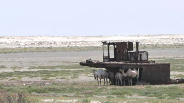 Animals gather in the shade of a rusting ship near the Aral Sea (Photo: Mark Pitcher)