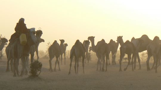 A pastoralist with camels in Niger. Pastoralists use resources flexibly and adapt to climate variability more easily than many other groups. State policies that favour settled agriculture are more of a challenge (Photo: Stephen Andersen/IIED)
