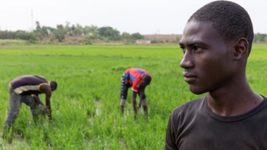 A new report urges governments and development agencies to develop context-specific strategies and support systems for agricultural advisory services that meet the needs of local farmers (Photo: IIED)