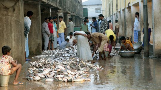 A wholesale fish market in Cox's Bazar on the Bay of Bengal. Fishing communities need access to finance and infrastructure such as clean water, refrigeration and transport (Photo: Aftab Uzzaman, Creative Commons via Flickr)