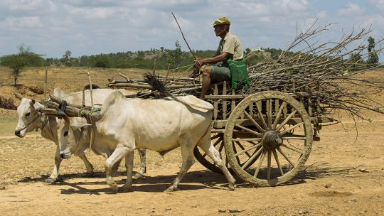 A man transports firewood on a cart. Firewood is the primary fuel for most rural households in Myanmar. It is time consuming and expensive and there are concerns about the health impacts of indoor pollution (Photo: Soneva Foundation, Creative Commons via Flickr)