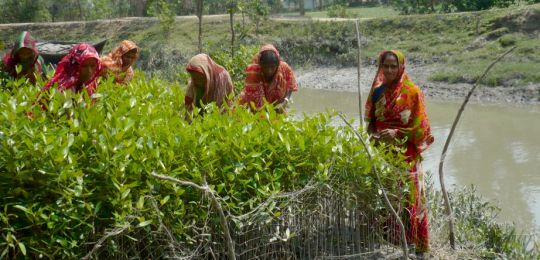CBA5 participants visited Char Kukri-Mukri island on the southeast coast. Here women tend mangrove seedlings destined to provide a barrier against erosion (Photo: B. Koelle)