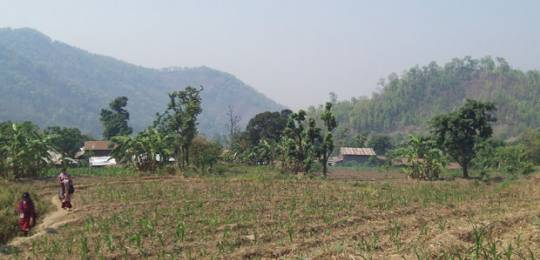 Maize crops in Kirtipur Village, Nawalparasi District, Nepal (Photo: Kate Wilson/IIED)