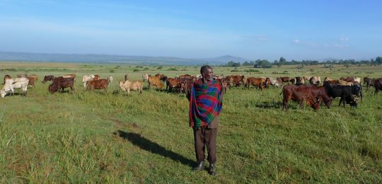 A herder guards his cattle in Western Ethiopia. In recent years the Ethiopian government has leased of thousands of square kilometres of land to foreign investors (Photo: Planète à vendre, Creative Commons via Flicker)