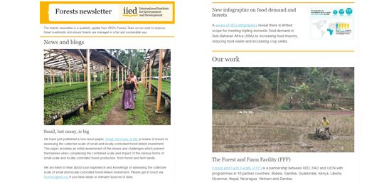 IIED's forestry newsletter is out now (Image: IIED)