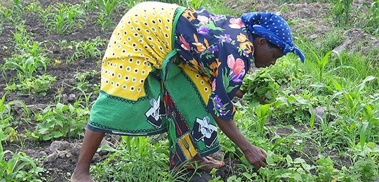land rights and agricultural investment in ghana For land-based investments in african agriculture due diligence and risk management for land based investments in agriculture foreword • those with legitimate rights to land in or around the project area (including those with formal ownership, customary own-ership.