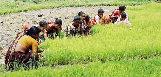 The voices of women involved in farming and fisheries, such as these in Bangladesh, are often lost in decision-making (Photo: CBFM-Fem Com Bangladesh/WorldFish, Creative Commons, via Flickr)