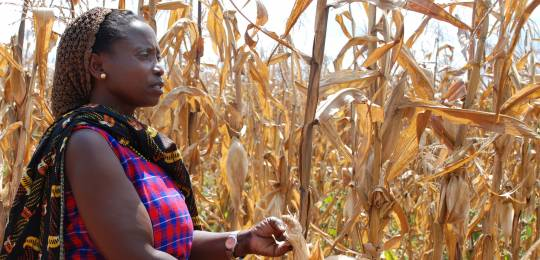 A farmer in Tanzania shows the effects of drought on her maize crop. Farmers in developing countries, and women farmers in particular, find it difficult to get multi-peril crop insurance (Photo: Anne Wangalachi, CIMMYT, Creative Commons via Flickr)