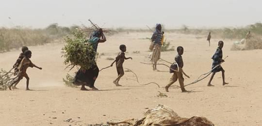 A family in Dadaab gathers sticks and branches for firewood and to make a shelter, while carcasses of animals that have perished in the drought are strewn across the desert (Photo: Andy Hall/Oxfam via Wikipedia Commons)
