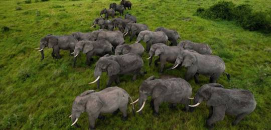 Trafficking of wildlife, driven by escalating demand for products such as elephant ivory, is a booming market worth US9bn a year (Photo: Nonprofit Organizations via Creative Commons http://creativecommons.org/licenses/by/2.0/)