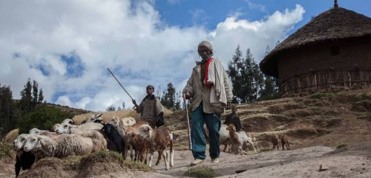 An Ethiopian farmer arrives for a field day on climate change adaptation. Ethiopia is the first LDC to submit its intended Nationally Determined Contribution in preparation of the Paris Agreement under the UNFCCC (Photo: ILRI/ZerihunSewunet, Creative Commons via Flickr)