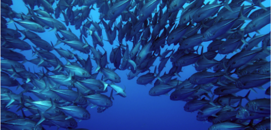 A shoal of fish; marine issues were among the focus of the international seminar