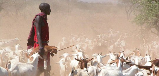A young Maasai herder sees a future in pastoralism (Photo: gritty.org)