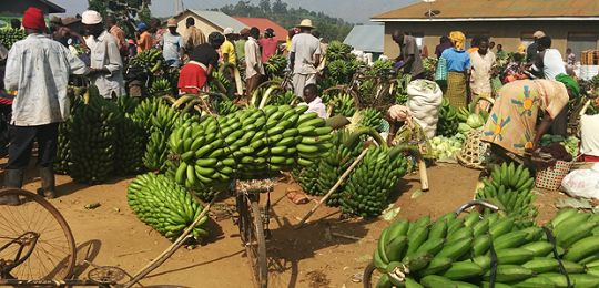 The sale of matoke in a market near Fort Portal, Uganda: green growth planning must take account of the informal economy (Photo: Matt Wright/IIED)