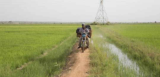 A farmer on his motorbike on the bank between irrigated fields. In the background, pylons carry hydroelectric power from the Sélingué dam (Photo: Mike Goldwater/GWI)