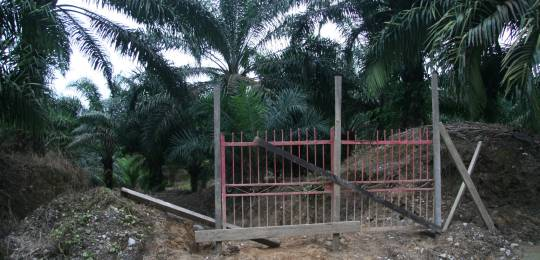 A gate blocks access to the customary lands of the Long Teran Kanan people in Sarawak. Malaysia has seen a huge expansion of oil palm plantations backed by international investors. The customary rights of local people are often ignored (Photo: Wakx, Creative Commons via Flickr)
