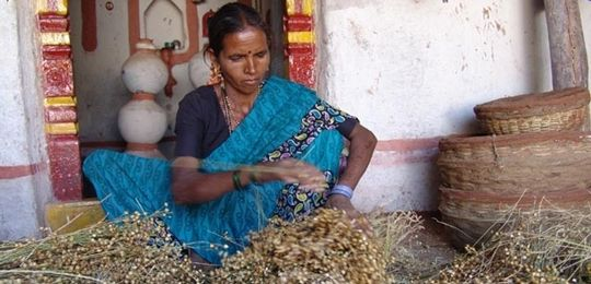 The Deccan Development society works with poor women in Andhra Pradesh, India. It facilitates a network of women seedkeepers who conserve and exchange seeds (Photo: Deccan Development Society)