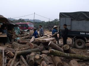 Loading takes place at a log yard in Yen Bai Province, Vietnam (Photo: Geraldine Warren/IIED)