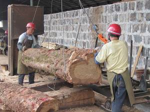 Logs are processed at a yard in Tengchong, China (Photo: James Mayers/IIED)