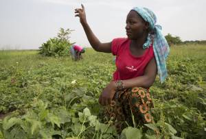 Fatim Dolo moved here to join her husband. They have a garden plot (0.1 ha) and grow okra and potato leaves. They sell the leaves at the market for 4,000 to 5,000 CFA. With better advice they could probably double their production (Photo: Mike Goldwater/GWI)