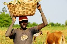 Are small-scale farmers there to feed themselves and large-scale farmers there to feed the world? Credit: Flickr/Peter Casier