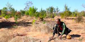Sapphire mines that become forests: small-scale mining in Madagascar