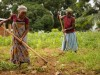 Women using hoes in a crop field in Kilosa, Tanzania.
