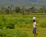 Woman walking through a field, carrying a bag on her head.
