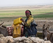 Woman with jerrycans and two donkeys.