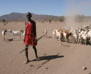 Pastoral livelihoods in the drylands are facing climate challenges such as increasing temperatures and increased frequency of extreme weather events. (Photo: Practical Action)