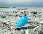 Plastic debris litters the beach on Clipperton Island, a tiny uninhabited coral atoll in the eastern Pacific Ocean. (Photo: Clifton Beard, Creative Commons via Flickr)