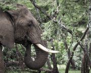 An elephant feeds on Acacia trees in Kenya's Ol Kinyei Conservancy. The privately managed conservancy offers employment and training to local communities (Photo: Stuart Price/Make it Kenya Photo, Creative Commons via Flickr)