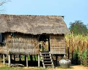 A farmer's house and sugar cane field in Cambodia, where there is concern about large-scale investment in sugar plantations driving local people off the land (Photo: Brian Hoffman, via Creative Commons)