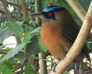 A native bird in Costa Rica found in a payments for environmental services project run by IIED and FONAFIFO (Photo Ina Porras)