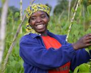 Introducing improved climbing bean varieties in Rwanda has transformed beans from a subsistence crop into a cash crop (Photo: Neil Palmer/CIAT via Flickr)