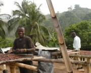 Men stand by trays of cocoa beans drying in the sun in western Ghana.