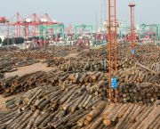 Vast quantities of logs being unloaded in the port of Zhangjiagang, South-East China. Estimates suggest timber imports travelling through Zhangjiagang increased by more than 60% in 2017 (Photo: Simon Lim/IIED)