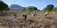 Farm labourers in Mozambique working to clear land for planting crops. Land purchases by foreign investment companies for agribusinesses are pushing farmers off their land. Using legal rights effectively can help local people get a better deal for themselves and their communities (Photo: Mike Goldwater/IIED)