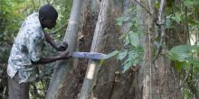 A villager gathers medicinal bark in Mozambique