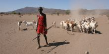 Pastoral livelihoods in the drylands are facing climate challenges such as increasing temperatures and increased frequency of extreme weather events (Photo: Practical Action)