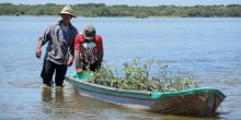 Two men pushing a boat filled with mangrove seedlings