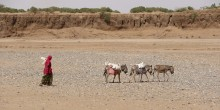 Women and three donkeys walk in a desert