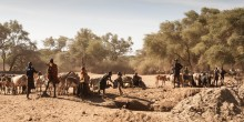 People and cattle in an arid landscape
