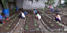 People squatting before plant beds