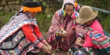 Indigenous communities sharing potatoes in the Potato Park, near Cusco, Peru. Credit: Asociacion ANDES