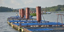 Floating boards on a lake, hiding the fish farming cages underneath