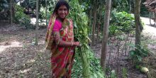 A farmer in Bangladesh who produces vermi-compost to fertilise her crops (Photo: Seth Cook/IIED)