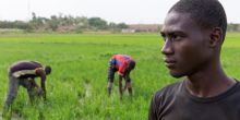 A young rice farmer at Sélingué, Mali. A new report urges governments and development agencies to develop context-specific strategies and support systems for agricultural advisory services that meet the needs of local farmers (Photo: Mike Goldwater)