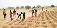 Workers digging zaï pits that help to preserve water on farms (Photo: IUCN)