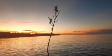 Tree branch stuck in the sea